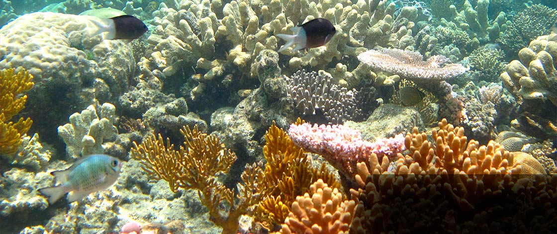 Coral reef. Image: Thinkstock