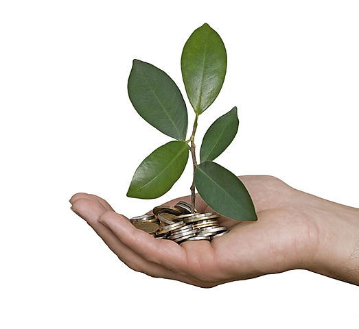 A plant grows from a pile of money
