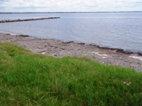 Seagrass meadow on shoreline