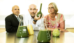 Algae where business meets biology