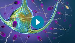 ocean microbiology image