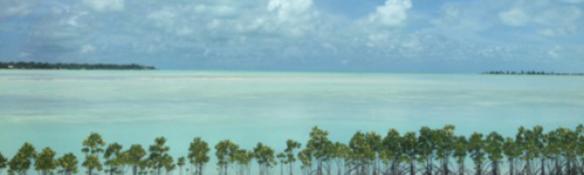 mangrove plantations