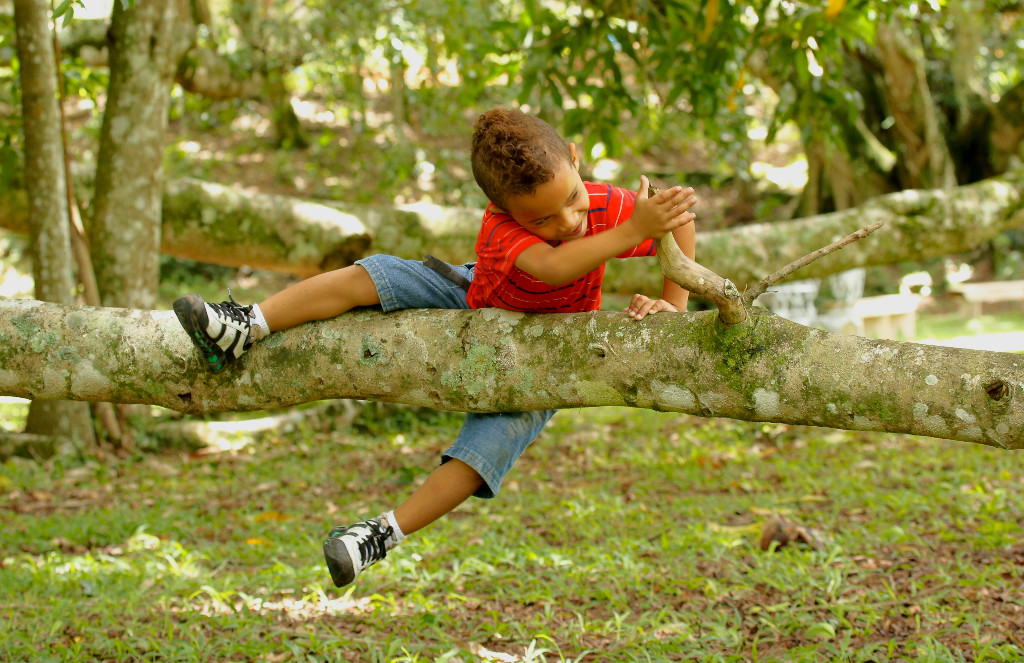 image of boy climbing a tree