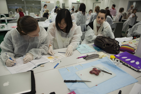 Biomedical Engineering sydney college of the arts courses