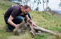 UTS postgraduate student, Ray Mjadwesch with a darted kangaroo