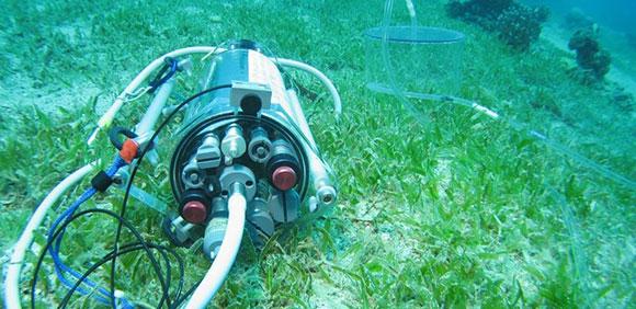 Fluorometer capturingproductivityof a seagrass meadow