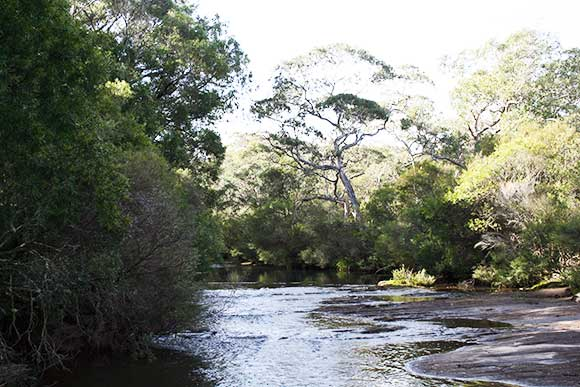 Groundwater dependent ecosystem woodland in the Kangaloon Borefield