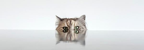photo of a cat peeking over the end of a table