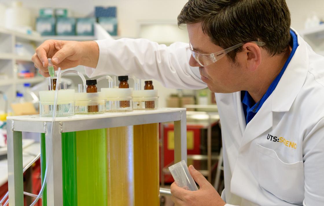 scientist inspecting algae solution
