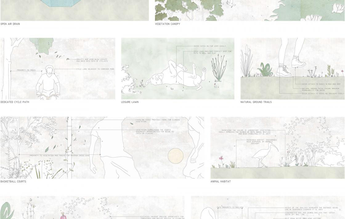 Landscape architecture drawings of how seeds are transferred in an outdoor environment