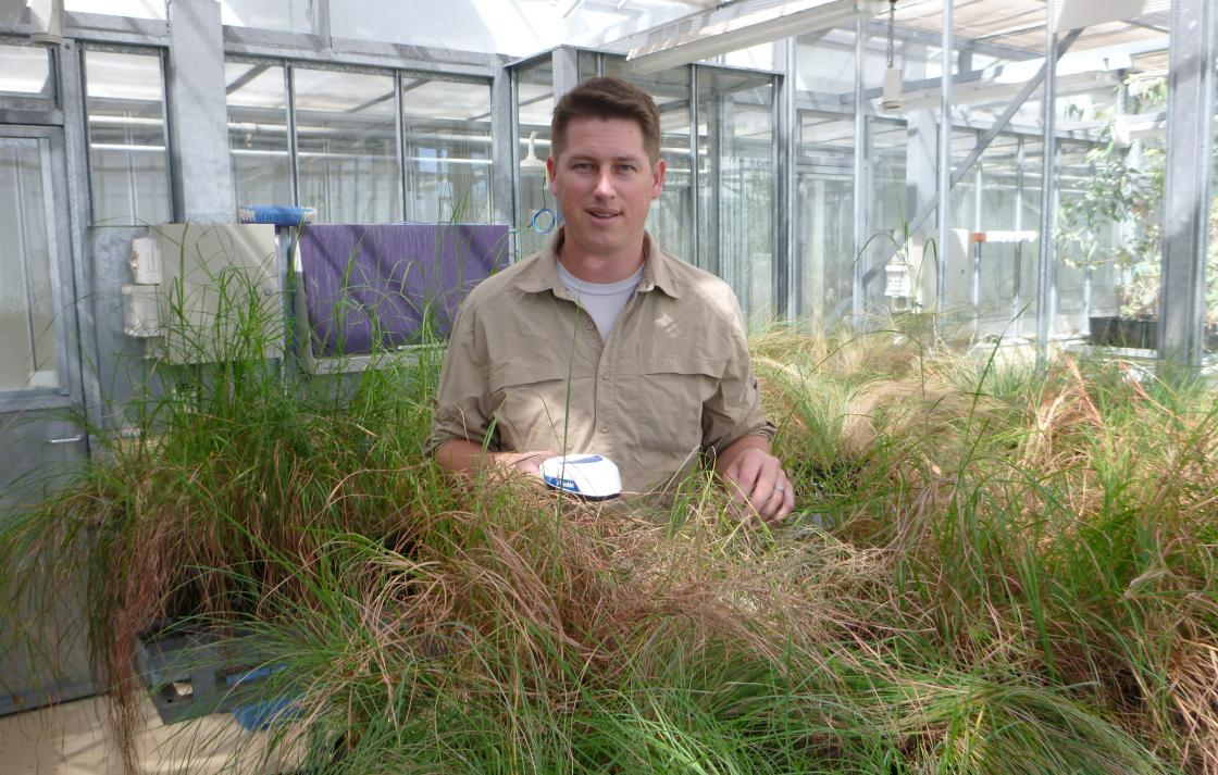 PhD candidate Chris Watson conducts greenhouse experiments for research into Australia's threatened native grasslands.