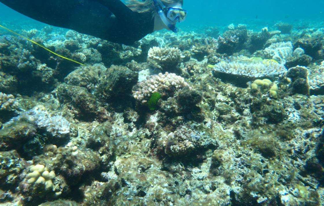 PhD candidate Jess Tout is researching coral-bacterial interactions