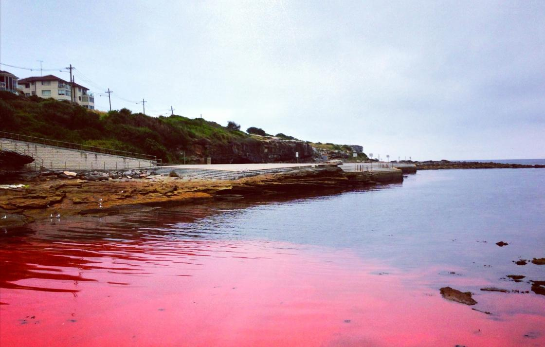 5.	A mass proliferation of Noctiluca scintillans, a red tide forming dinoflagellate. This species does not produce biotoxins that are harmful to the aquaculture industry, but may form dense aggregations that deplete oxygen and produce ammonia.