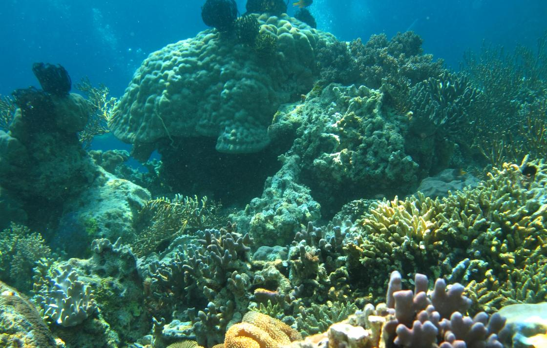 Indonesian coral reef showing diversity of corals