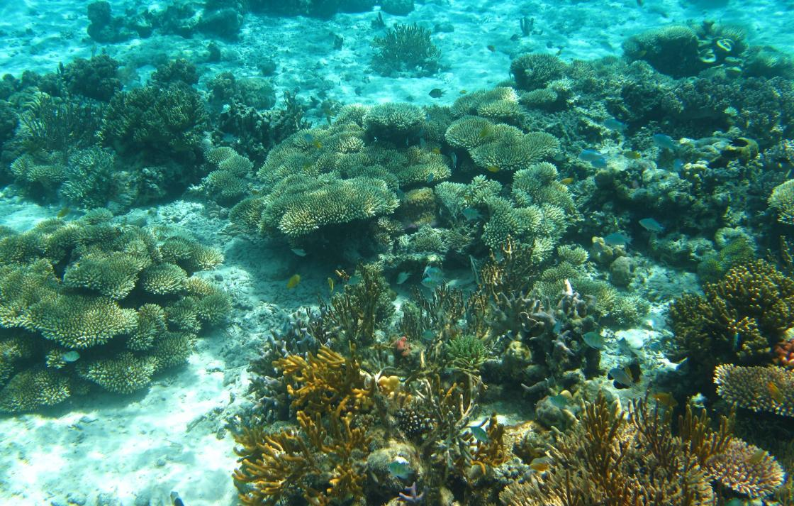 Coral on Indonesian reef flat