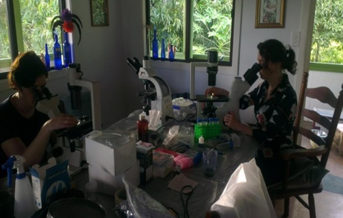 Rarotonga, Cook Islands field sampling analysis