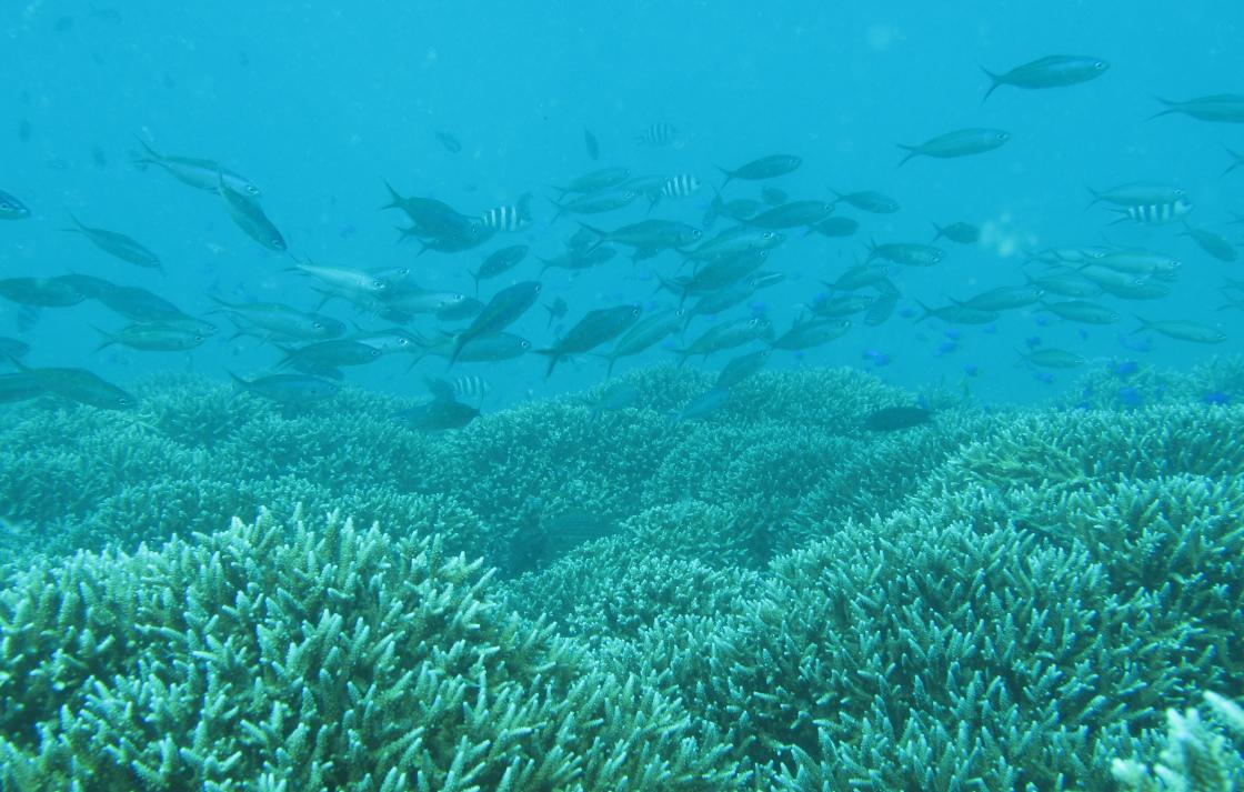 Seychelles coral reef showing Acropora thickets and fish