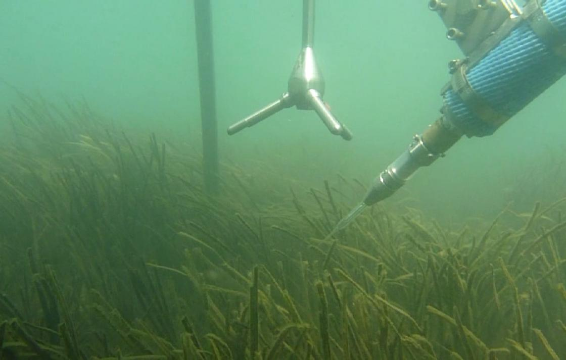 C3 investigates new techniques to measurre carbon flux in seagrass meadows
