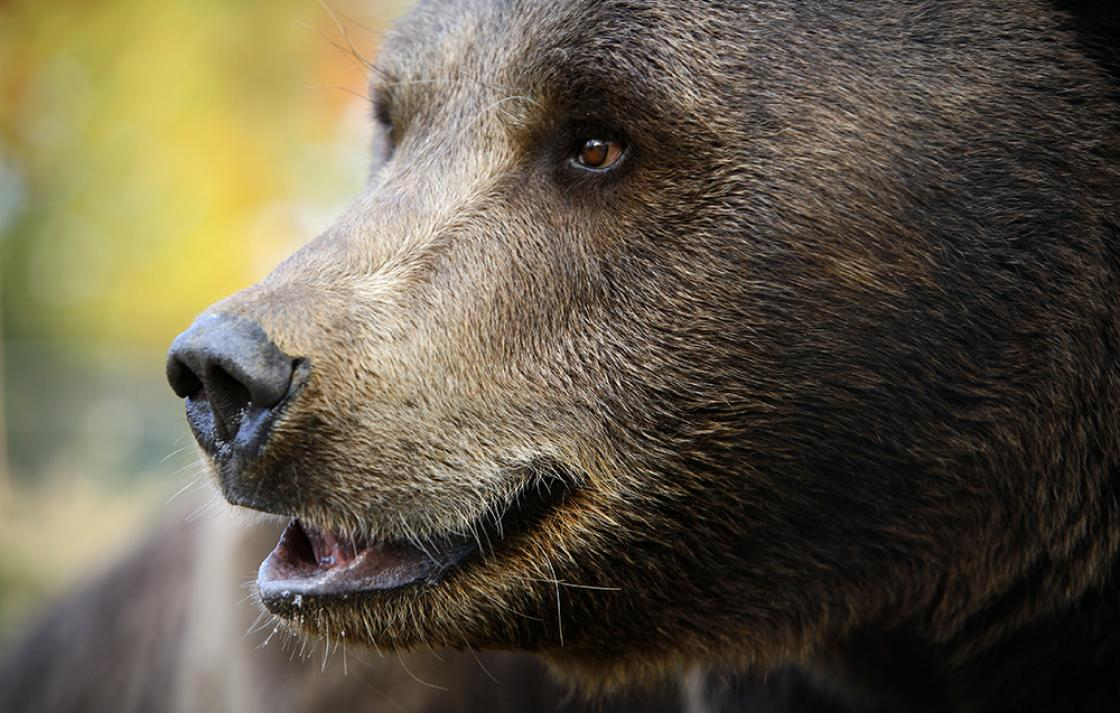 Compassiona conservation: bear