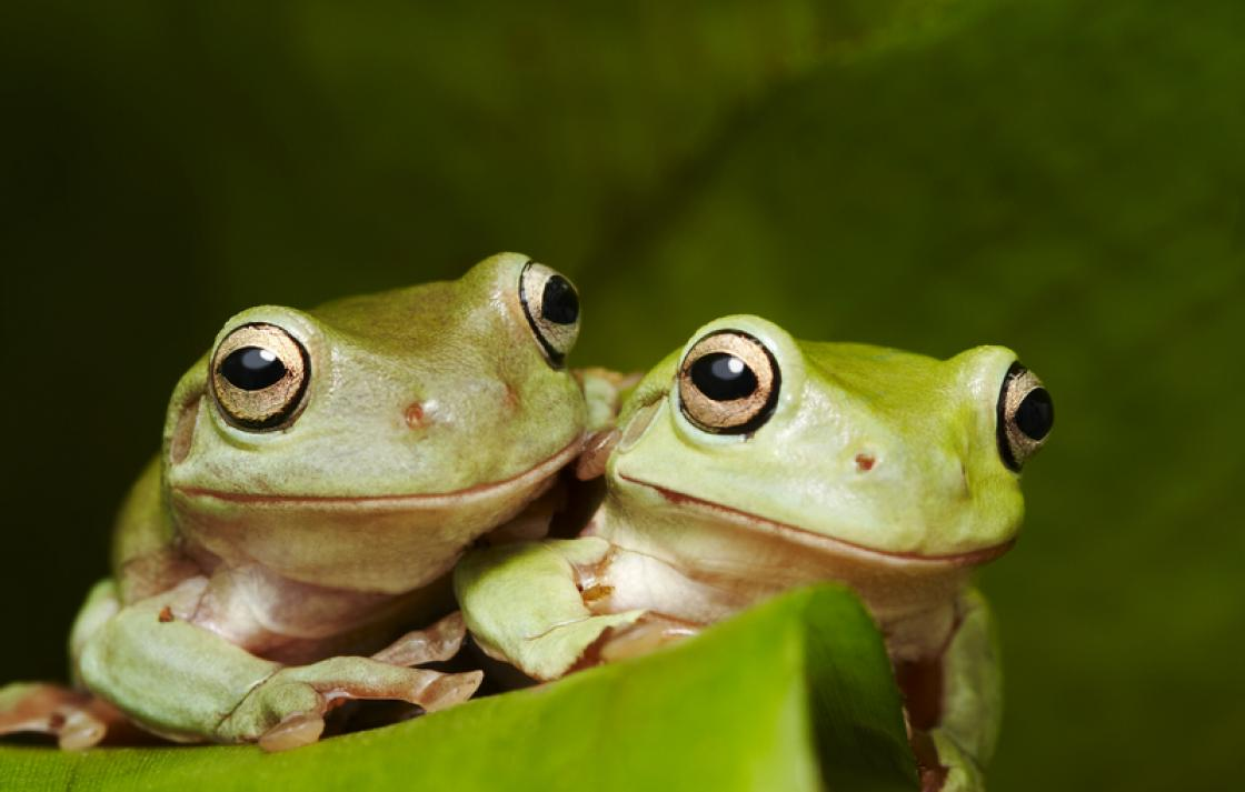Compassiona conservation: frog