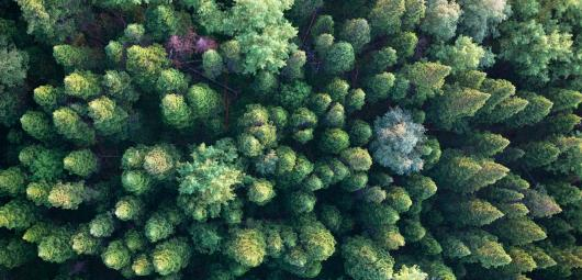 View of trees from above