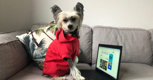 A small dog wearing a red coat sitting on a couch with her paw on an open laptop