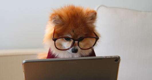dog wearing glasses looks at computer screen