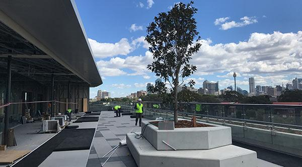 Rugby Australia Building level 5 terrace