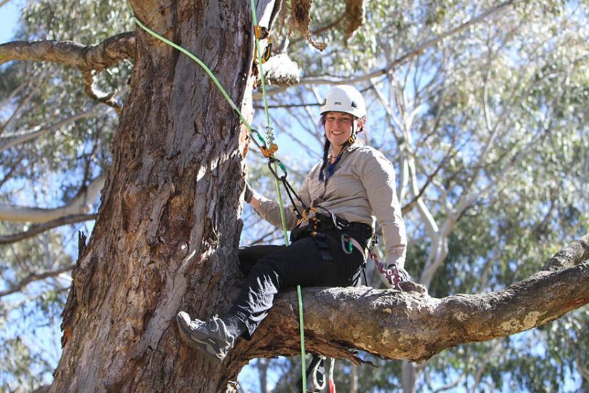 Reannan Honey up a tree