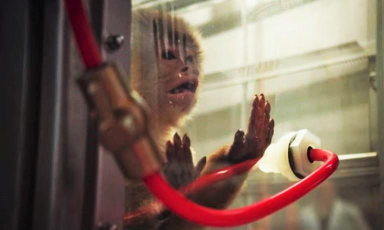 netflix monkey