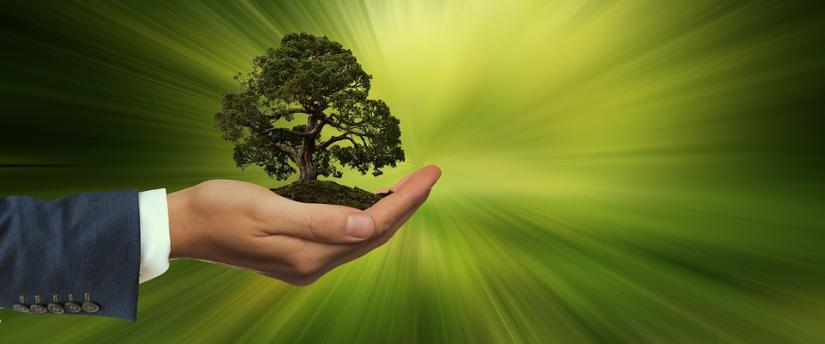 Tree in palm of hand on green background