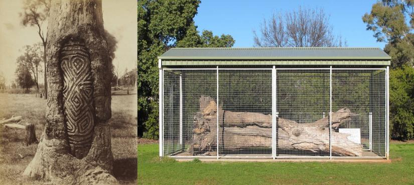 Photographs of two carved trees, one in situ and the other in a cage