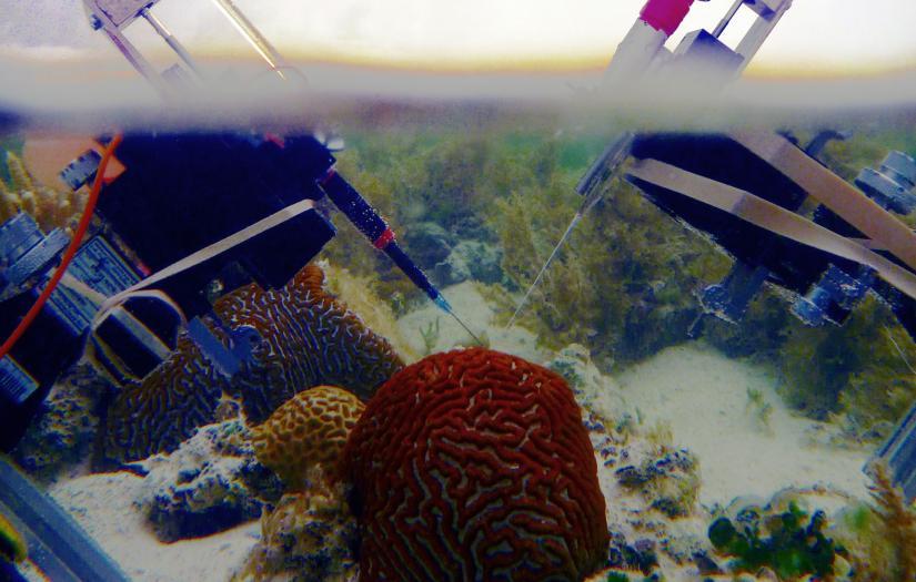 coral microsensors
