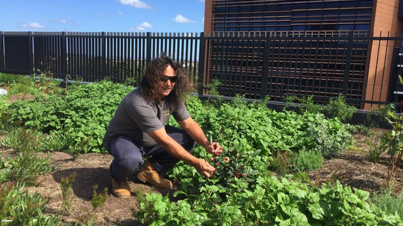 Clarence on rooftop farm