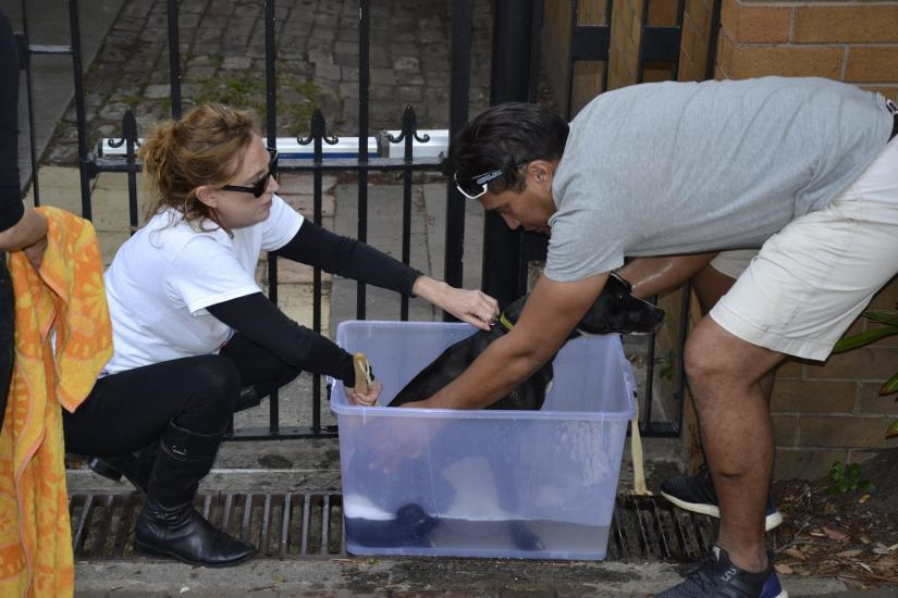 Dr Bronwen Dalton washing a dog in a clear plastic tub with another volunteer.