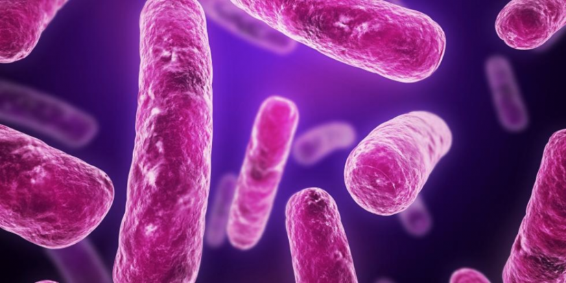 Visualisation of E. coli bacteria