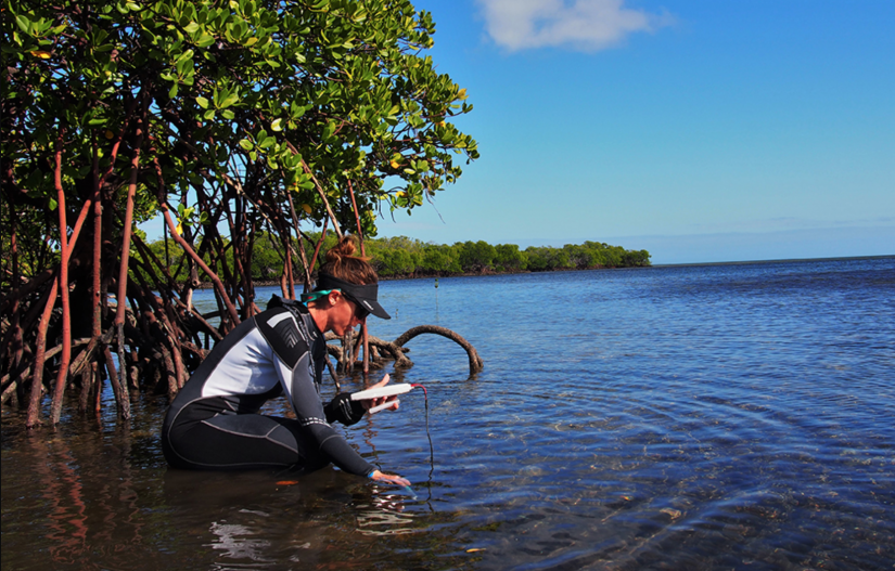 Dr Emma Camp tests the physicochemical conditions of the seawater in a mangrove lagoon.