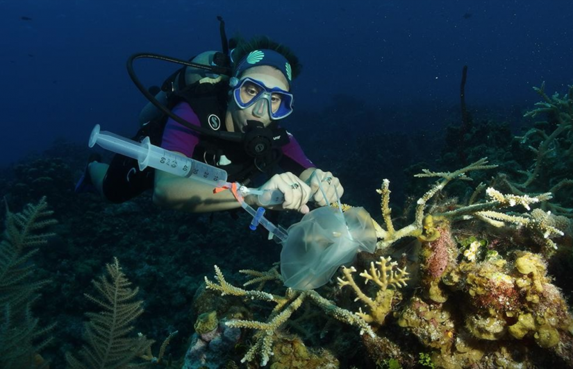 Dr Emma Camp uses a custom-made incubation chamber to assess coral physiology.