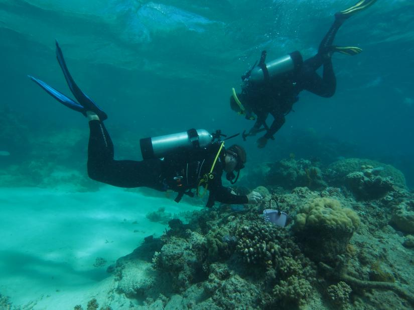 Two divers use a device to attach coral to the Great Barrier Reef.