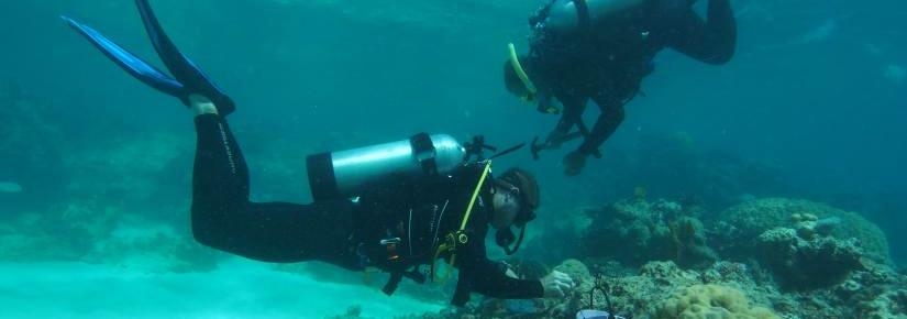 Two scientists working underwater on the Great Barrier Reef