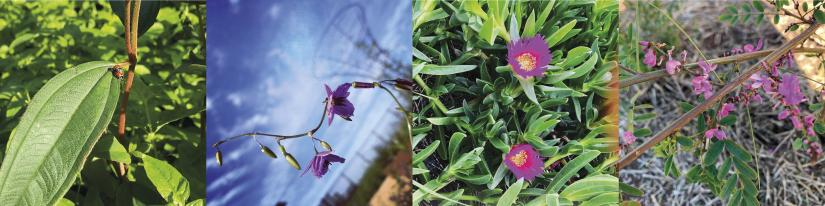 Four close-up photos of greenery and brightly coloured flowers from Yerrabingin's farm.