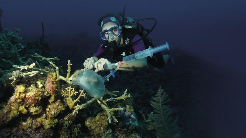 Emma Camp in scuba gear, underwater. She is using scientific equipment on coral.
