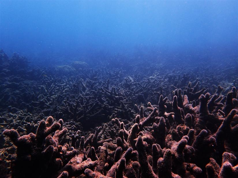 Coral degraded