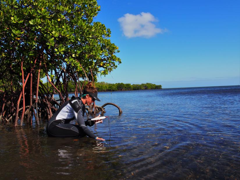Emma Camp crouches in a shallow lagoon, testing the water with scientific equipment. Behind her and around the fringes of the lagoon are mangrove trees.