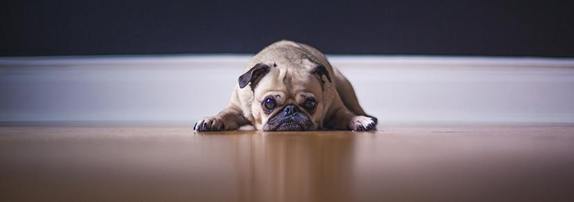 A dog laying on the floor looking sad