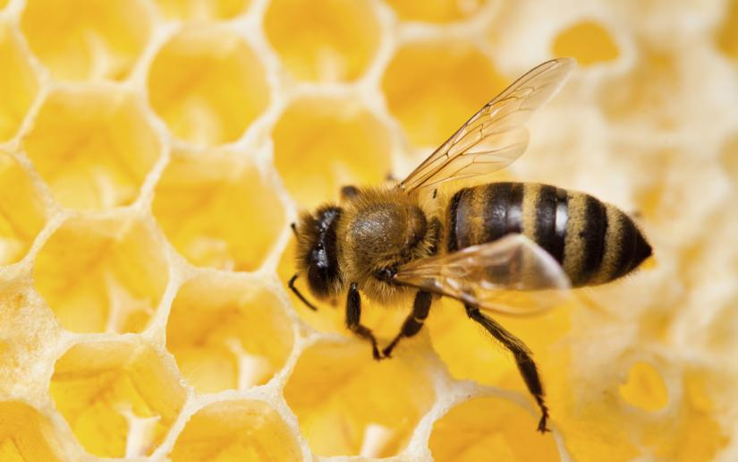 A bee sits on a honeycomb.