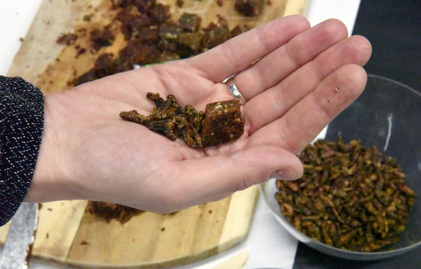 Hand holding a food made from crickets