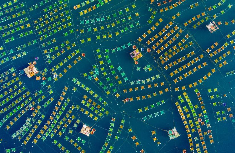 Aerial view of lobster farm in Phu Yen