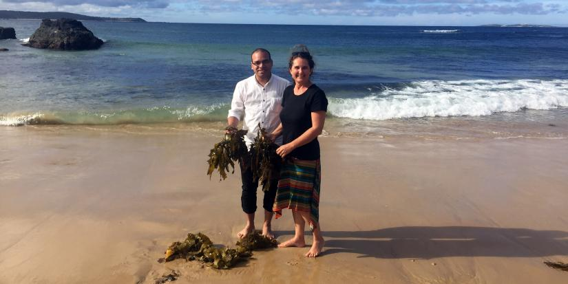 Climate Change Cluster Research Fellow Dr Manoj Kumar (L) and Sea Health Products owner Ms Jo Lane with kelp. Dr Kumar is a leading algae expert and a mentor for Green Light.