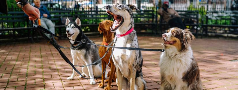 Image of 4 dogs